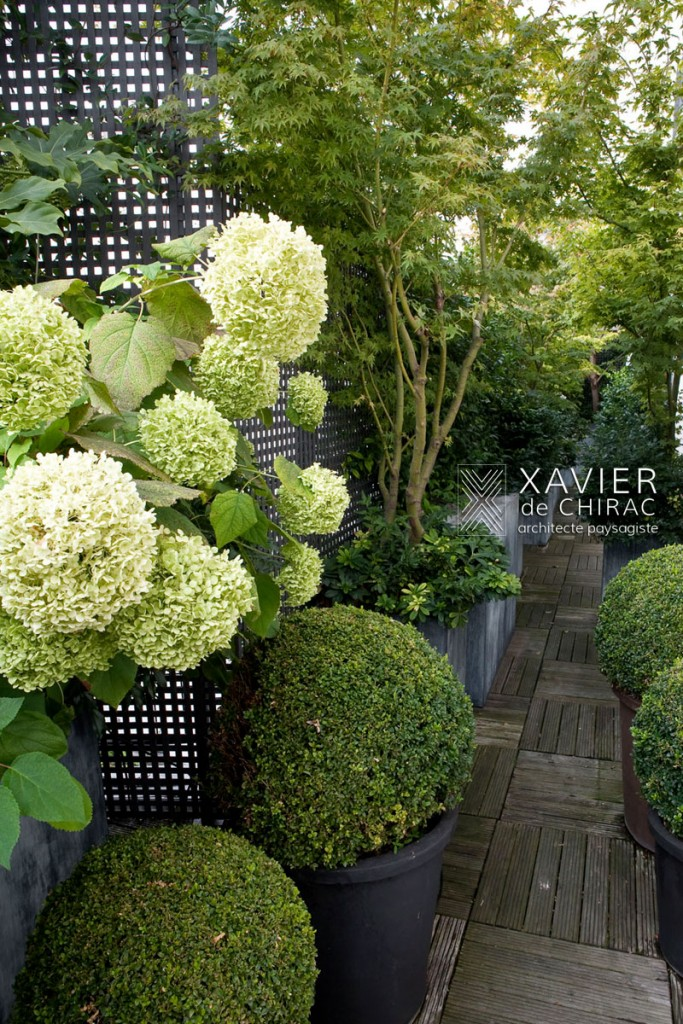 xavier de chirac, terrasse luxuriante Paris New York Landscape Designer, Roof gardens, Terrace gardens, Sustainable Landscapes